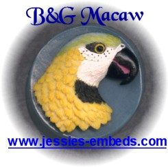 Macaw Soap Mold, Round